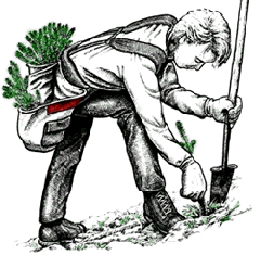 Shovel Planting Tips for Newcomers