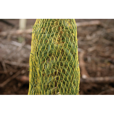 Tiller Protection Netting